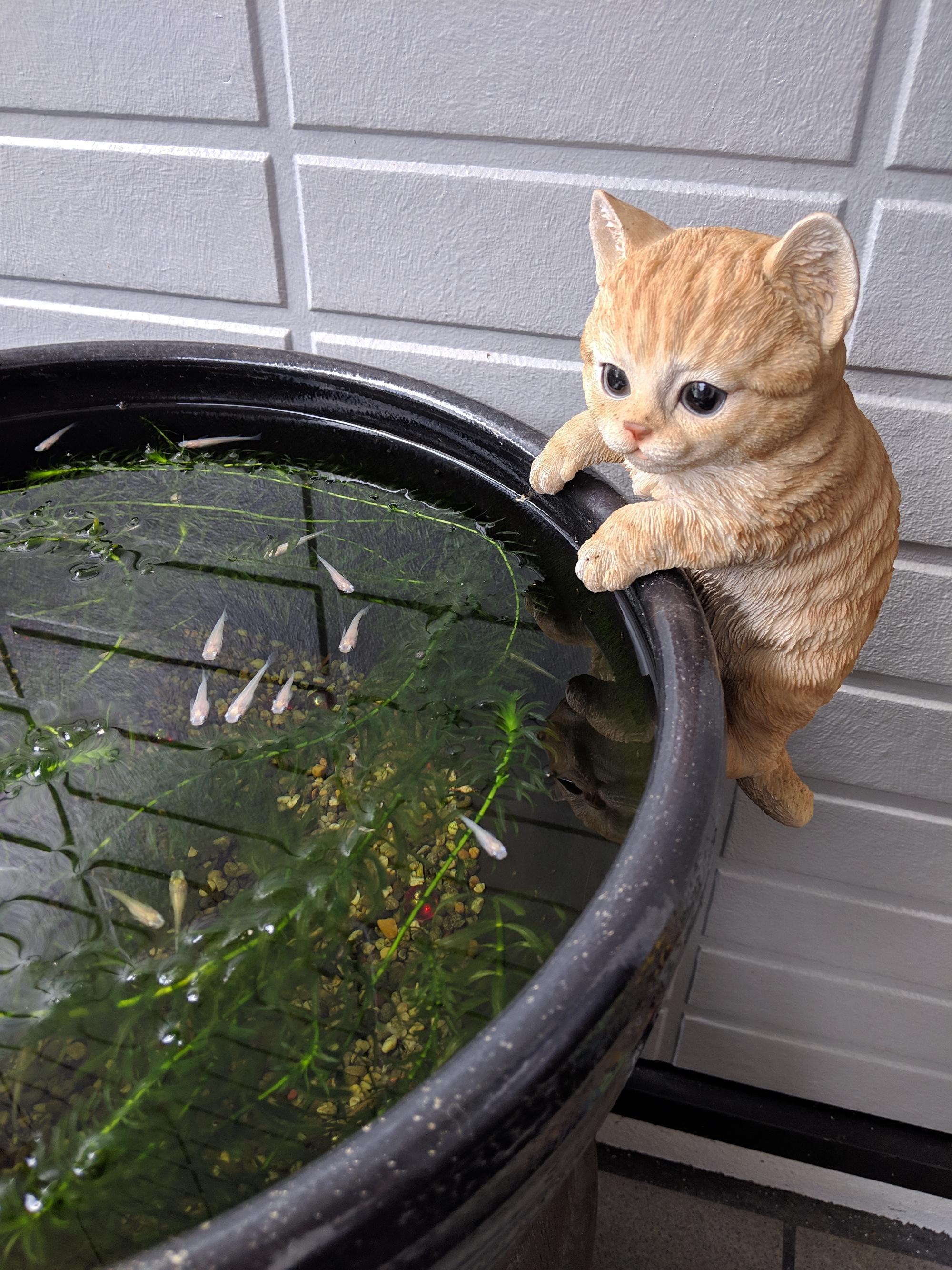 メダカとネコ_画像