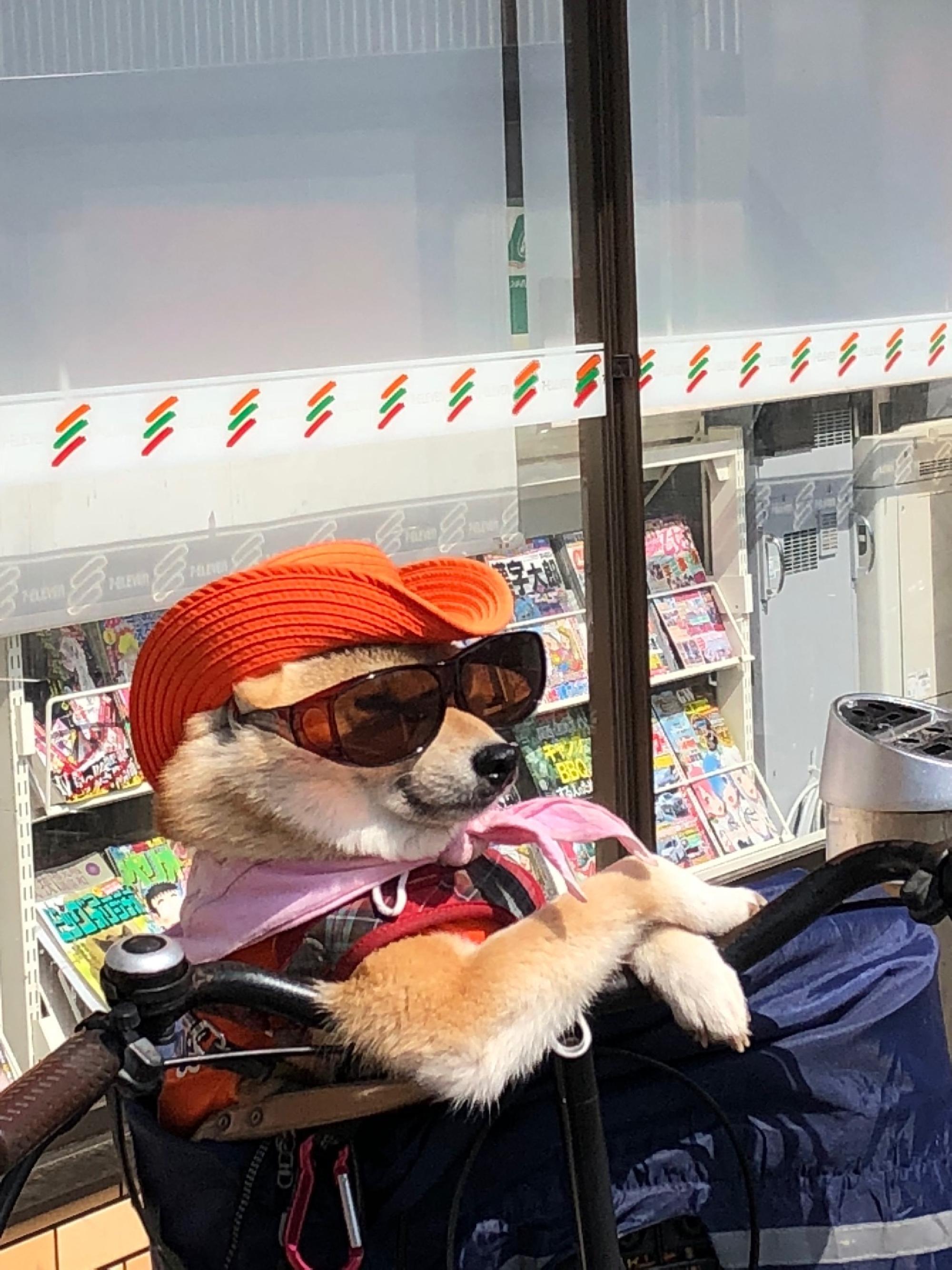 大阪市東住吉区で有名なワンちゃん_画像