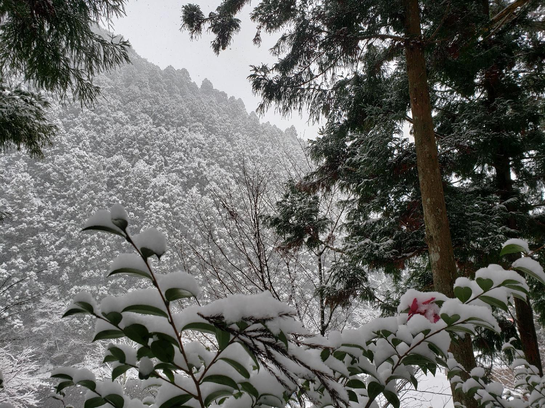 2020/12/16 冬香
