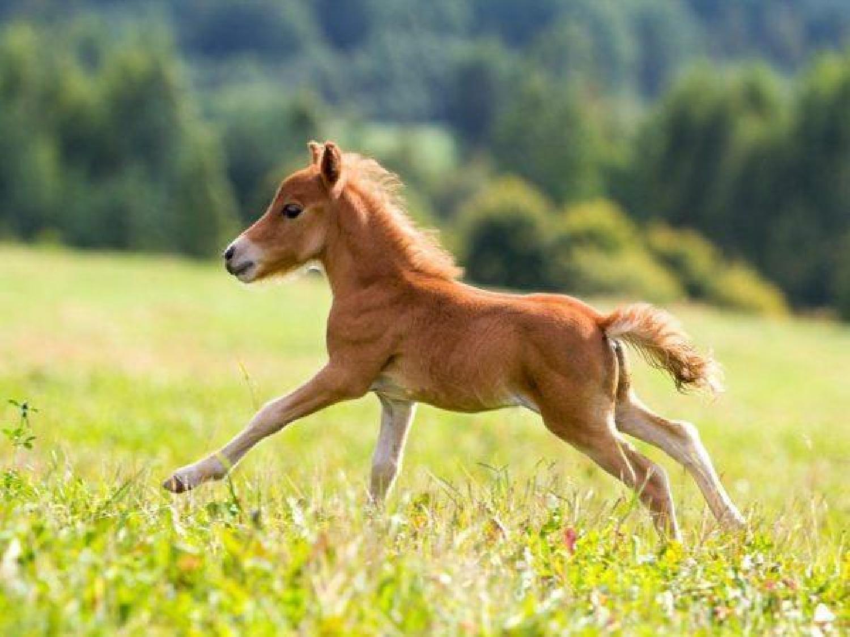 草原を奔る子馬のように